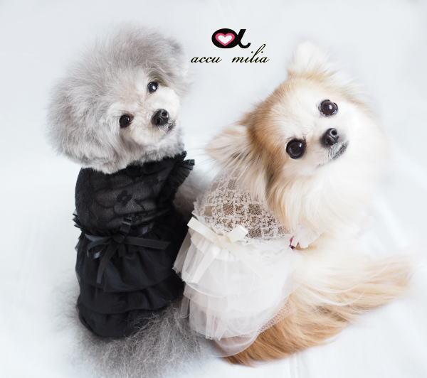 アキュミリア accu milia  レースチュチュワンピース【小型犬 犬服 ウエア ワンピース ドレス セレブ 】:TIARA PETS