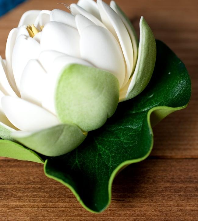 Tirakita Lotus Flowers Floating Lotus Floating Lotus Flower Lotus