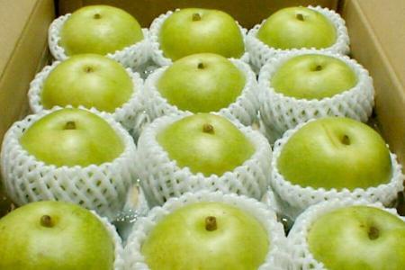鳥取産 ハウス 二十世紀梨(にじゅっせいきなし)約10kg 大玉24個入り 10キロ 青梨 20世紀