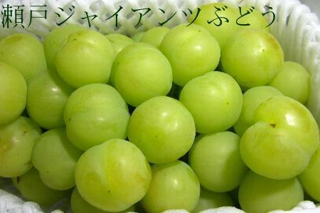能吃每个冈山生产濑户巨人葡萄(桃太郎葡萄)2kg(4-6串)皮!作为新口感的话题的葡萄的♪02P12Oct15