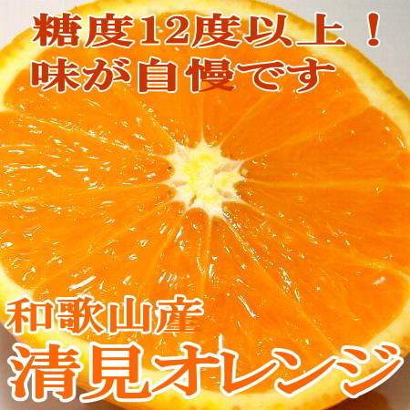 有田 清見オレンジ 約10kg Mサイズ(64個前後入り)和歌山産 きよみおれんじ
