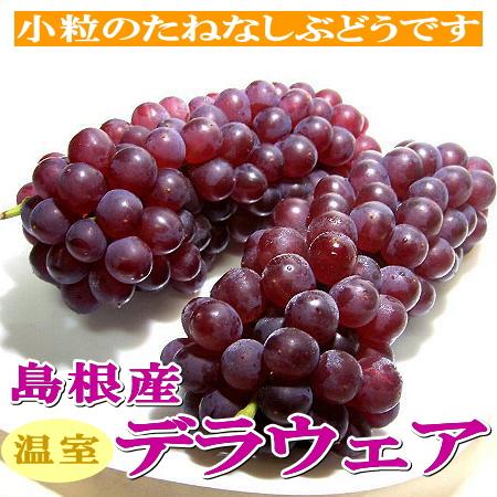 """没有岛根产温室特拉华葡萄2L尺寸2kg店长推荐的水果[糖度约20度]种的葡萄""""黛拉葡萄""""在水果中有最好的甜味。作为容易用tanenashide小粒吃的葡萄的02P09Jul16"""
