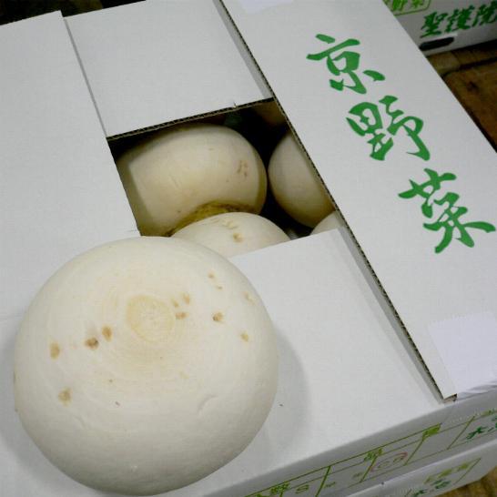 「京野菜」 聖護院かぶ (しょうごいんかぶ) 2Lサイズ 9玉 京都産 かぶら【ラッキーシール対応】
