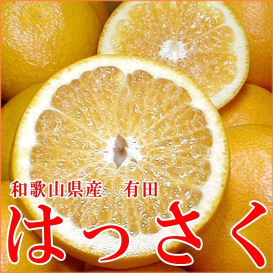 和歌山产纪州的八朔桔(一下子开花)5kg L尺寸(进入16左右)南国的太阳和黑潮培养的爽快的柑橘(日本制造kankitsu)SS10P03mar13