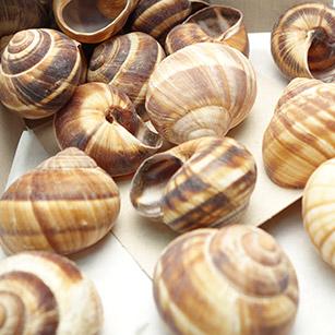 エスカルゴ殻 [再販ご予約限定送料無料] 10粒小分け 全国一律送料無料