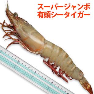 特大 スーパー ジャンボ有頭シータイガー海老 27~30cm 新作アイテム毎日更新 ついに再販開始 8尾 尾程 ワンフローズン