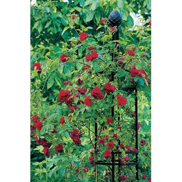 【Oberisk1 R2/オベリスク 1R2】本格派 ドイツ製 ガーデニング 庭いじり エクステリア 飾り バラ 薔薇 クレマチス 蔓植物 上質 おしゃれ 丈夫