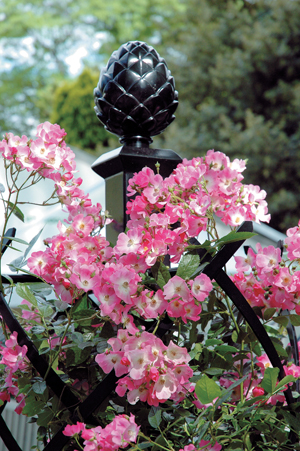 Gardening gardening exterior garden decoration rose rose clematis liana  good-quality stylish strong garden accessories made in orthodox school  Germany