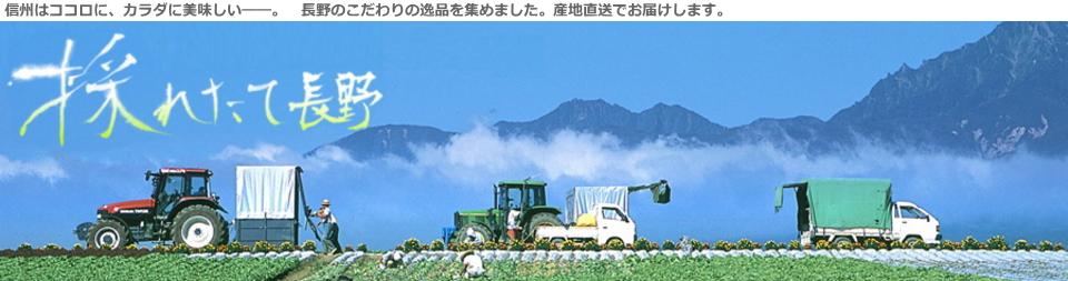 採れたて長野:おいしいお米を長野から!! 信州の美味しいがここに