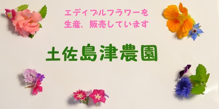 土佐 島津農園:土佐のお山から ときどきのものがたりを すこしづつお届けいたします
