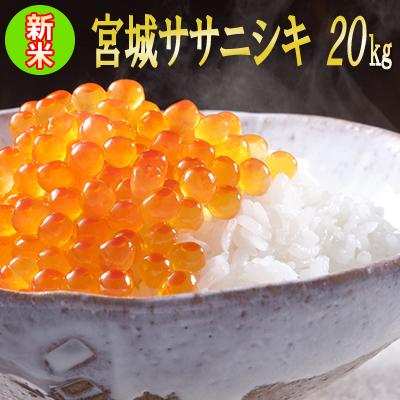 令和元年 宮城県産 ササニシキ 20kg 【米】 玄米,5分,7分,精白米(精米時重量約1割減)【dp