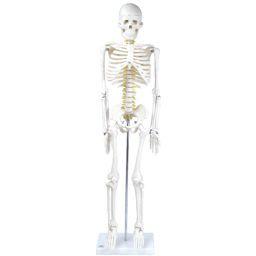 全身骨格模型 1/2サイズ 標準型 IK21 トワテック
