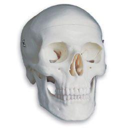 頭蓋 標準型モデル A20 3B