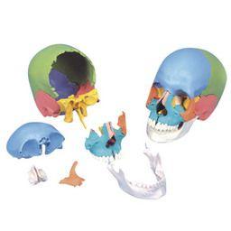 頭蓋骨22分解キット、マルチカラー仕様 A291 3B