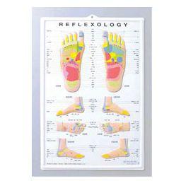 楽天市場 3d足のリフレクソロジーチャート ポスターサイズ 55 36 5cm 医道の日本社 テーピング 鍼灸用品 トワテック