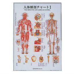 人体解剖チャートI 104×74cm アルミパネル入 アプライ