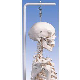 スタン 標準型骨格モデル 吊り下げ型スタンド仕様 A10/1 3B