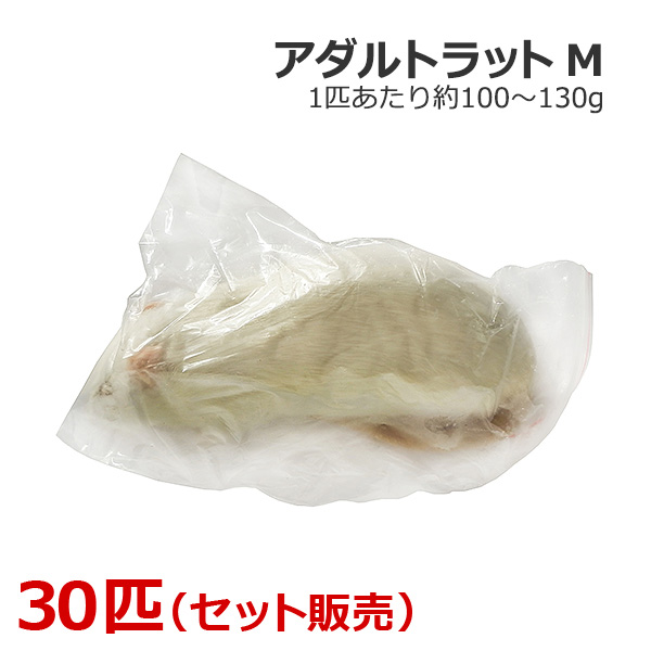 冷凍 アダルトラット Mサイズ 30匹