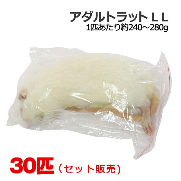冷凍 アダルトラット LLサイズ 30匹