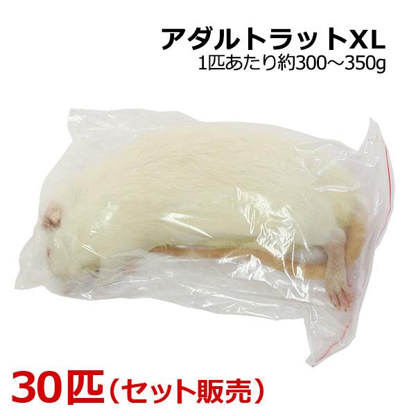 冷凍 アダルトラット XLサイズ 30匹