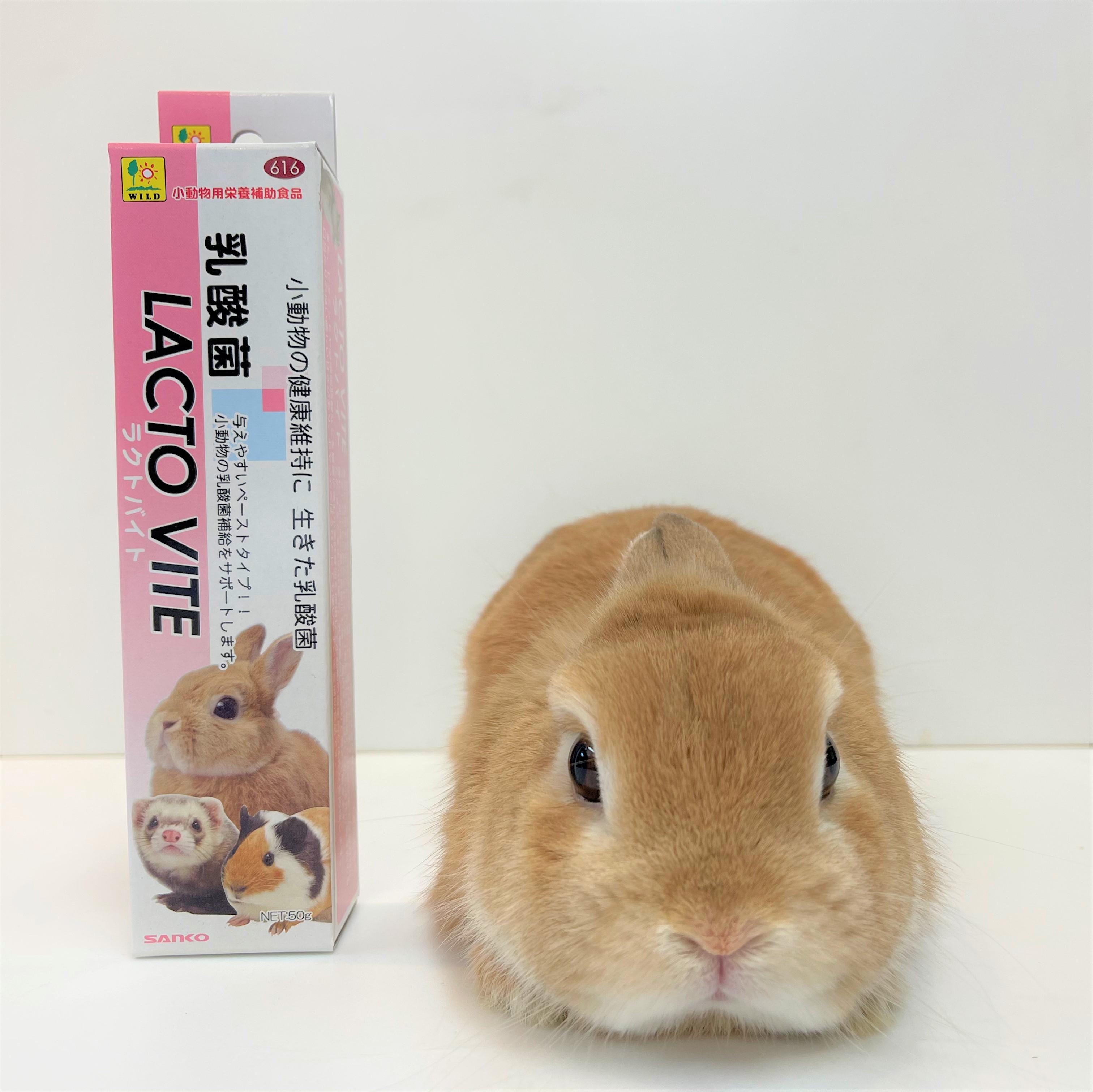 小動物の健康維持に 卓抜 生きた乳酸菌 SANKO 新作製品、世界最高品質人気! ラクトバイト 50g