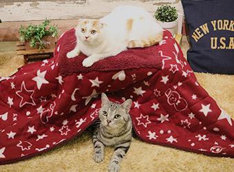 【猫の暖房器具】4976555949735  ドギーマンハヤシ  遠赤外線 ペットの夢こたつ  ふとん&マット付き
