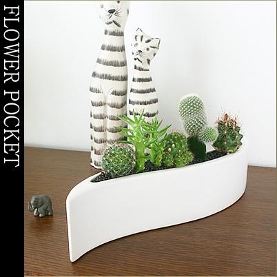 tsukaguchi Rakuten Global Market Plants Interior modern cacti