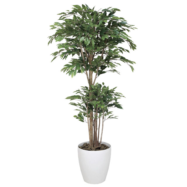 中古 光触媒人口植物 造花 観葉植物 アレンジメント おしゃれ 年中無休 かわいい 新築祝い 開店祝い 誕生日 光の楽園 送料無料 162F570-36 個人様購入可能 ロピカルベンジャミン 1.8 92348 sss