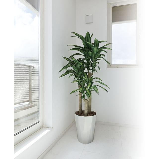 【個人様購入可能】[sss]●代引き不可 送料無料 光の楽園 [400A300-31] 幸福の木1.6 92358