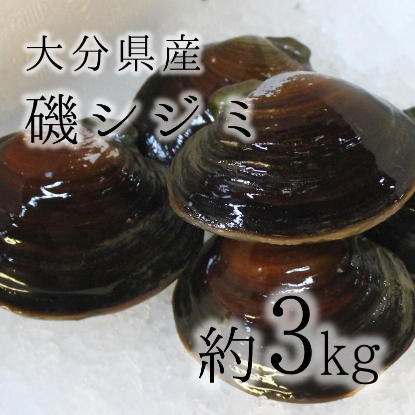 磯シジミ 豊洲直送 大分県産他 約3kg 約50-60g/1枚 高級貝類 イソシジミ 酒蒸し旨し!