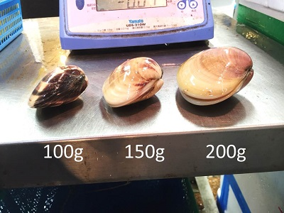 天然 地はまぐり 活 国産 特大サイズ 100-120g 約3kg 千葉産 BBQに最適! ギフト[豊洲直送]地ハマグリ 地蛤 バーベキュー 海鮮 BBQ お歳暮 御歳暮【地ハマ3K】 冷蔵