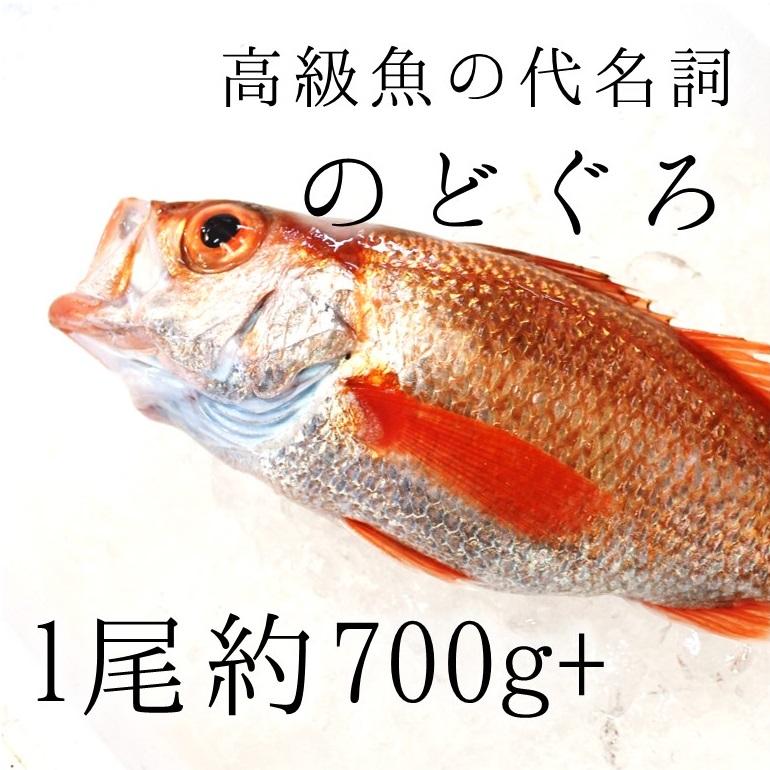 生 のどぐろ 喉黒 ギフト 赤むつ 特大サイズ 鮮魚 (豊洲直送)特大約700-800g 日本海産(鳥取・山口 生・島根他)アカムツ ギフト 鮮魚 刺身 ノドグロ【生のどぐろ700-800g】 冷蔵, ナンモクムラ:298980b9 --- tosima-douga.xyz