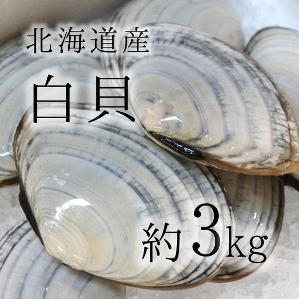 白貝 豊洲直送 北海道産 約3kg 約50-60g/1枚 シロガイ サラガイ バター焼き旨し【白貝3K】 冷蔵