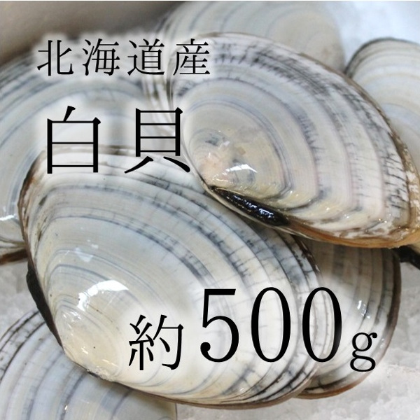 旨くてレアな貝類を豊洲よりお届け 通販 激安 白貝 豊洲直送 北海道産 約500g 約50-60g バター焼き旨し シロガイ500g 冷蔵 サラガイ 1枚 与え