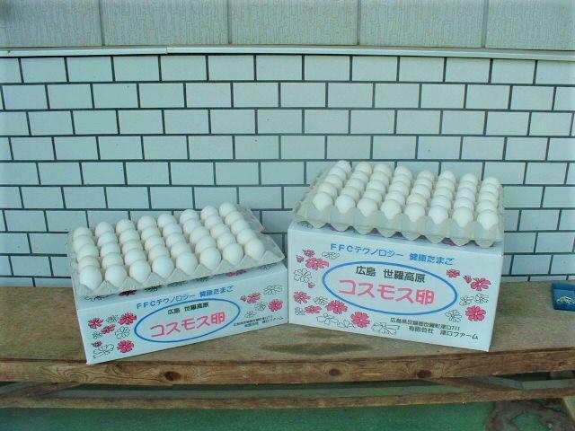 月間優良ショップ受賞 好評 飼料は遺伝子組み替えをしていない種子のとうもろこしを使用 送料込 コスモス卵 セール特価 80個入り☆ 白玉