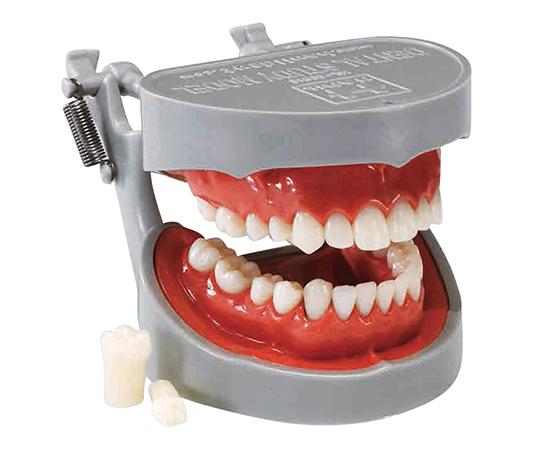 いまだけ!★ポイント最大16倍★【全国配送可】-歯牙模型 ソフトタイプ マイクロテック 型番1158  JAN4582389543447 aso 7-3818-01 -【医療・研究機器】
