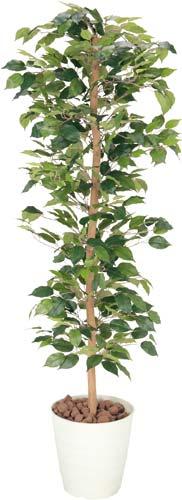 【全国配送可】-(642KU-005)人工植物 ベンジャミン 高さ1700 光触媒 株式会社アートクリエイションkaf003875 -【お買い得商品】