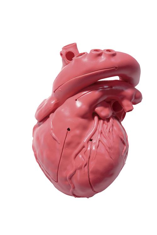 ★最大P25倍★ 8/4-8/9【送料無料】-CardioModelEV(成人正常 XC-03T(アカチャクショク) 品番 my24-7808-00-- 1入り-【MY医科器機】