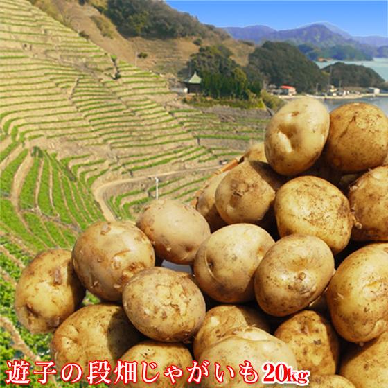 【遊子20】遊子の段畑じゃがいも 20kg(サイズ込み)※天候にもよりますがご注文順に1週間~10日前後で順次発送致します。【愛媛県産】【送料無料】じゃがいも ジャガイモ 芋 遊子