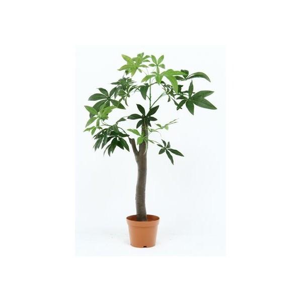 フジボウエキ 観葉植物 パキラ 朴の木タイプ グリーン グリーンデコ鉢付 52665 13498 1台