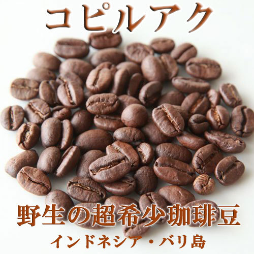 ジャコウネココーヒー 500g コピルアク コピルアック【浅煎】【野生】