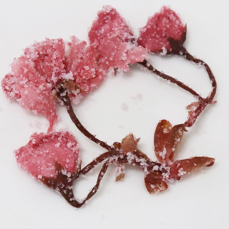 さくらの花(塩漬け)(10kg) 桜花 塩漬 10Kg (1kg×10) 赤 桜 桜の花 さくら 塩漬け 塩づけ 業務用 大容量  まとめ買い 製菓 材料 和菓子 神尾食品工業
