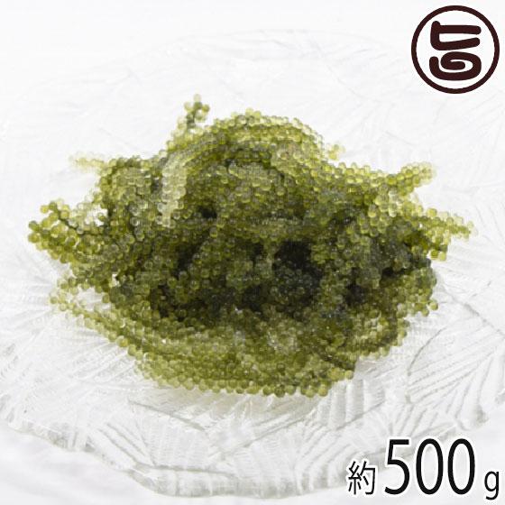 純沖縄産 A品 朝摘み 生海ぶどう オジーの夢 500g  沖縄 土産 定番 人気