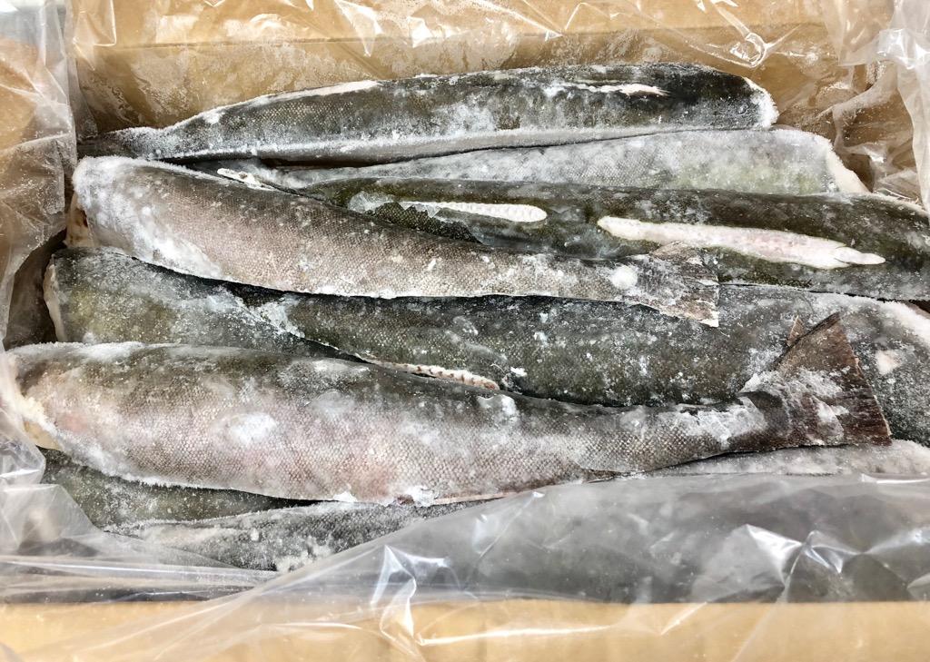 【 銀鱈・業務用・脂あります 】 銀鱈 10kg 業務用センターカット【脂のってます】煮付けが最高にうまい【冷凍便】
