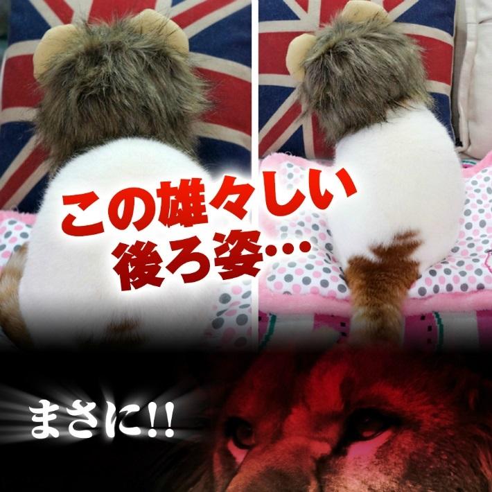 ペット用ウィッグ ♪ ライオン 耳付き  たてがみ【全3サイズ】ペット用かつら ネコ 小型犬 猫ちゃんのハロウィン コスチュームに!インスタ映え 撮影用