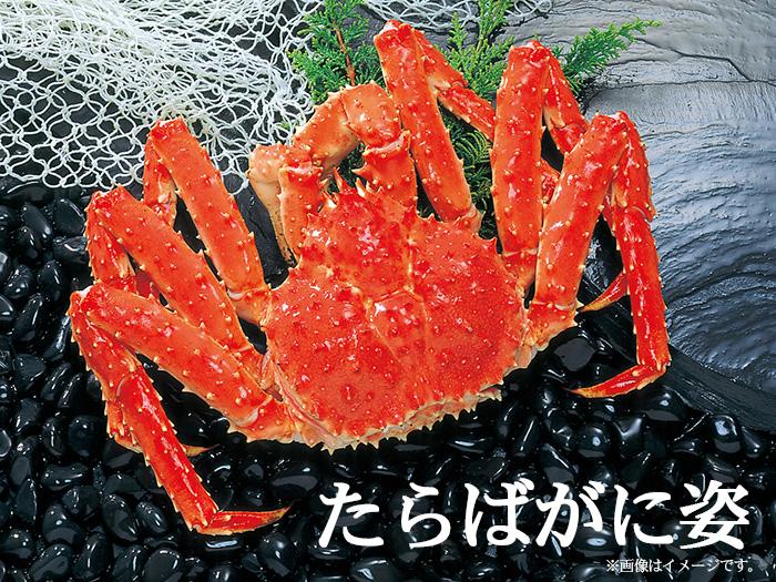 鮭いくら・スモーク専門店マルタカ 驚きのボリューム!プリプリの身肉は旨さ格別♪ビックタラバガニ姿 約1.8kg