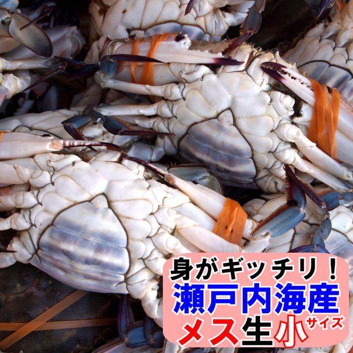 山口県産海鮮広場 魚かつ 【クーポン利用で5%OFF】ワタリガニ メス選り抜き小サイズ生約1,1kg(4−5尾)送料無料わたりがに、渡り蟹、ガザミ