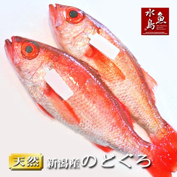 【送料無料】のどぐろ 新潟・日本海産 ノドグロ 1000g以上・2尾(生冷凍)