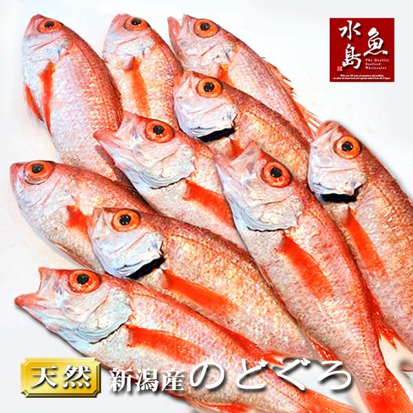 急速冷凍で鮮度抜群 業務用にも 送料無料 のどぐろ 国内在庫 新潟 在庫一掃売り切りセール 100g以上 日本海産 生冷凍 ノドグロ 10尾