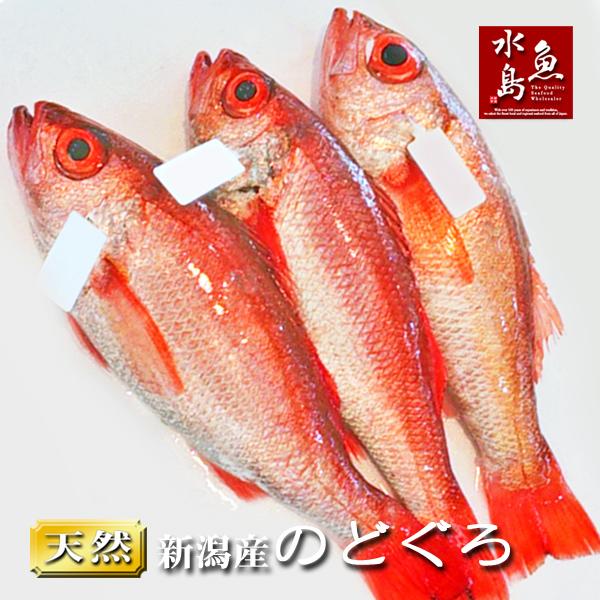 【送料無料】のどぐろ 新潟・日本海産 ノドグロ 400g以上・3尾(生冷凍)